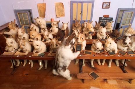 Rabbits_at_School