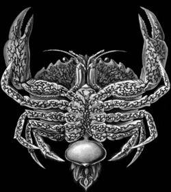 Rhizocephela barnacle
