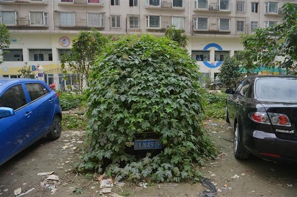 Car_zombie_plants