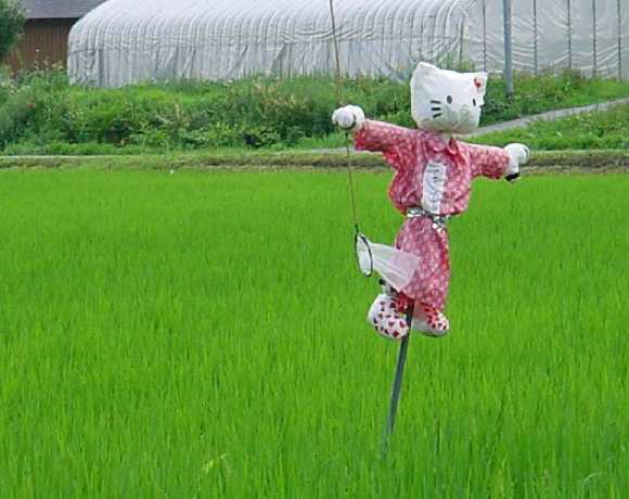 Scarecrow_Japan_kittyscare