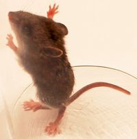Mouse_WoodleyWonderworks