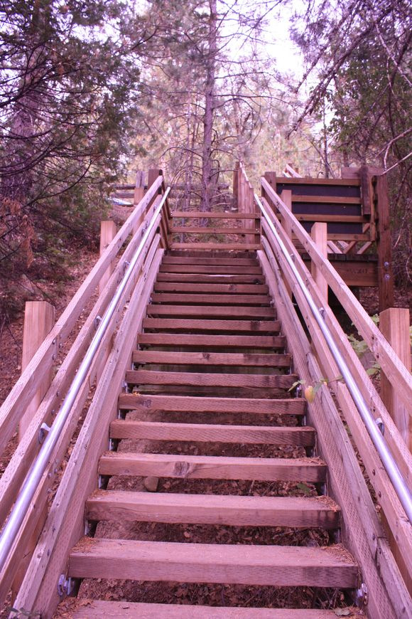 Stairs in the woods_Sunburned Surveyor