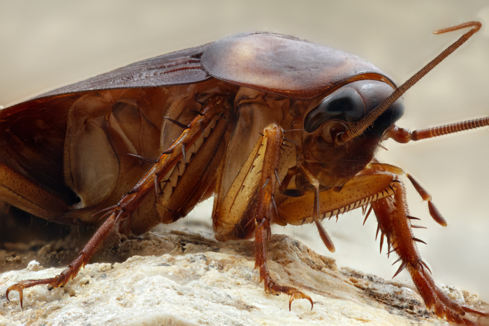 Cockroach_brentbristolsr
