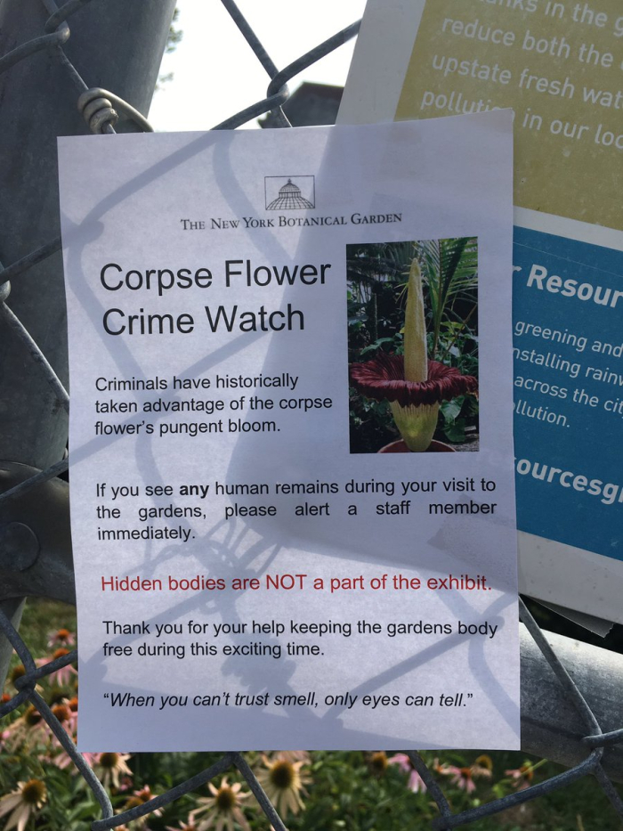Corpse flower watch