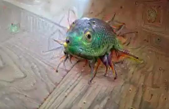 Google Deep Dream frog screenshot