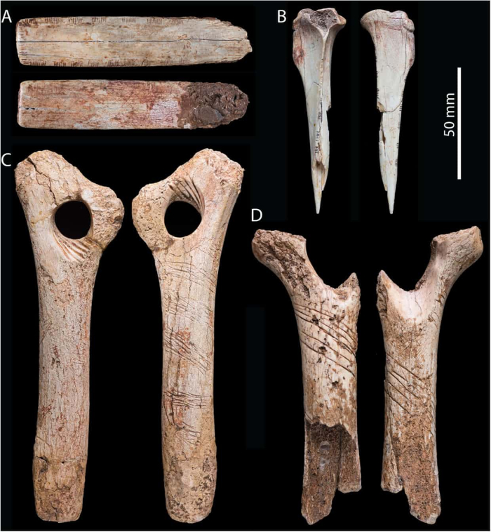 Cannibal Britain bones