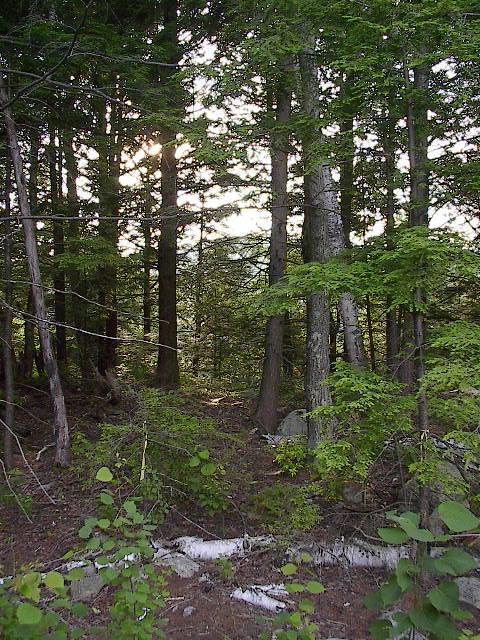 Riptonfdforest